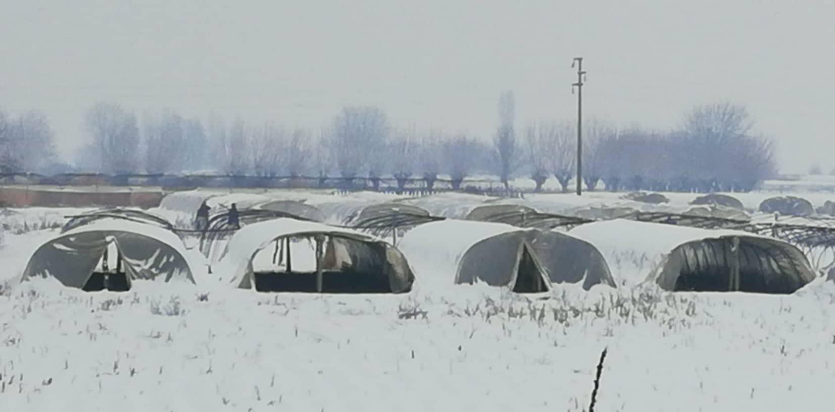 Photo of Поради снегот и температурите, раноградинарите од струмичко ,,бдеат'' над расадот и пластениците