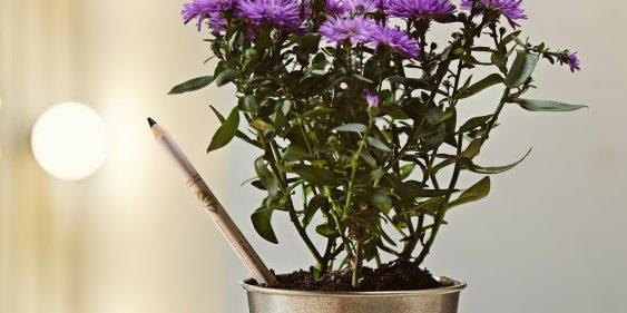 Од молив до растение