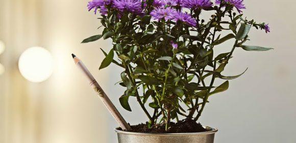 Photo of Од молив до растение