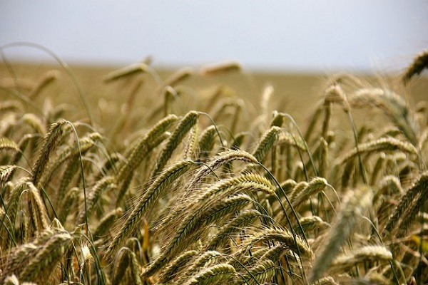 Photo of Темата за земјоделството продолжува да ги загрозува преговорите меѓу САД и ЕУ