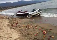 Преспанските јаболка завршија вo езероto