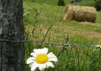 Земјоделски развој во хармоничен однос со природата
