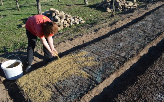 Сеење на расад за производство на пиперки