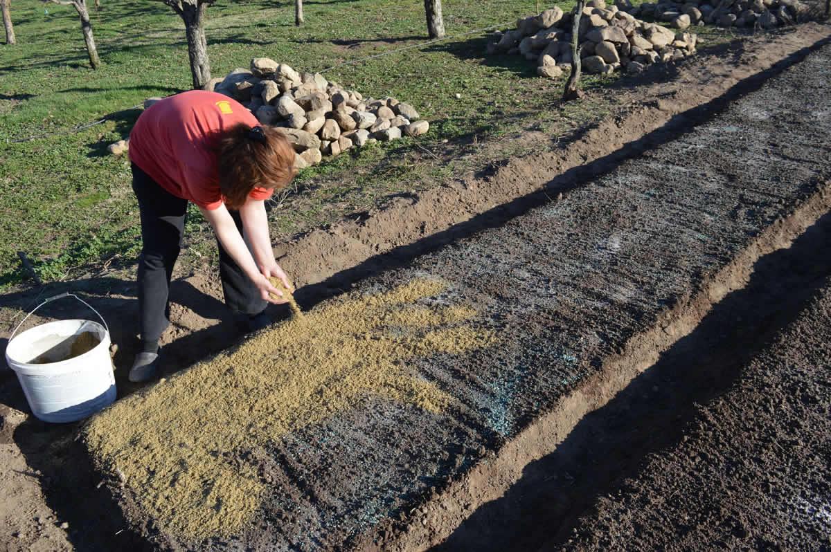 Photo of Сеење на расад за производство на пиперки
