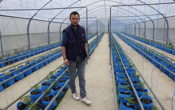 Хидропонско производство на домати во Крушево