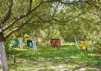 Помор на пчели поради непрописно користење на пестициди