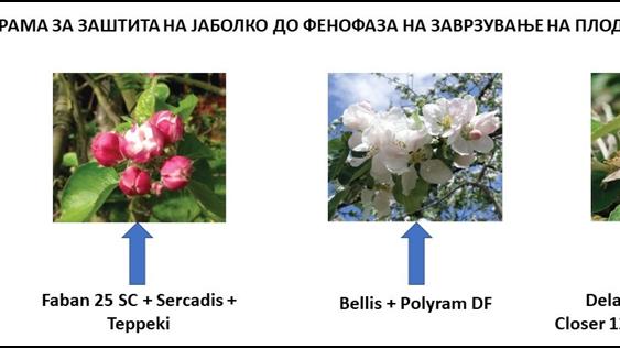 Заштита на јаболкото во производни услови на Р. Македонија