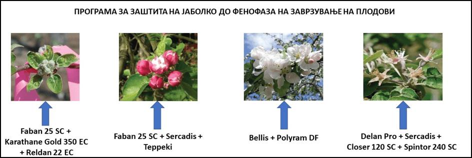 Photo of Заштита на јаболкото во производни услови на Р. Македонија