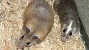 Photo of Заштита на стрните жита и луцерката од штетни глодари