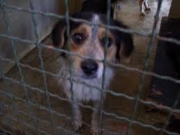 """Photo of Забрана за заловување на бездомни кучиња му изрече АХВ на стационарот  """"Вардариште"""""""