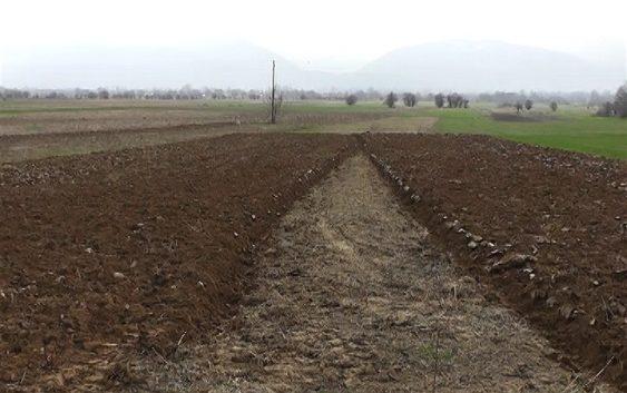 Се повеќе земјоделци од тетовско произведуваат колку за себе