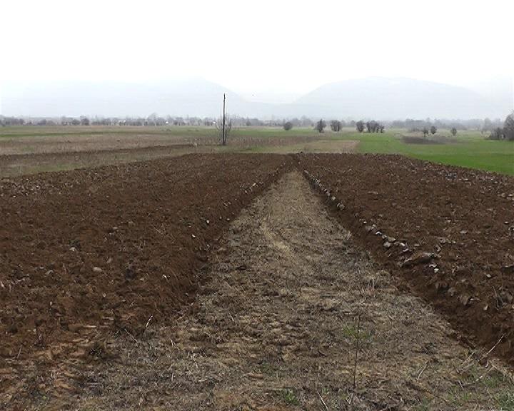 Photo of Се повеќе земјоделци од тетовско произведуваат колку за себе