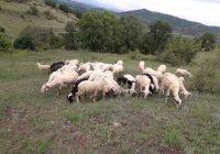 Кога ќе ги преброиме овците, ќе ни биде полесно