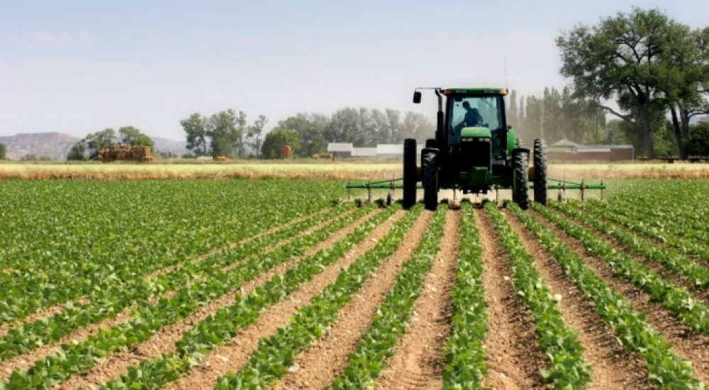 Photo of Дождот позитивно ќе влијае на земјоделските култури