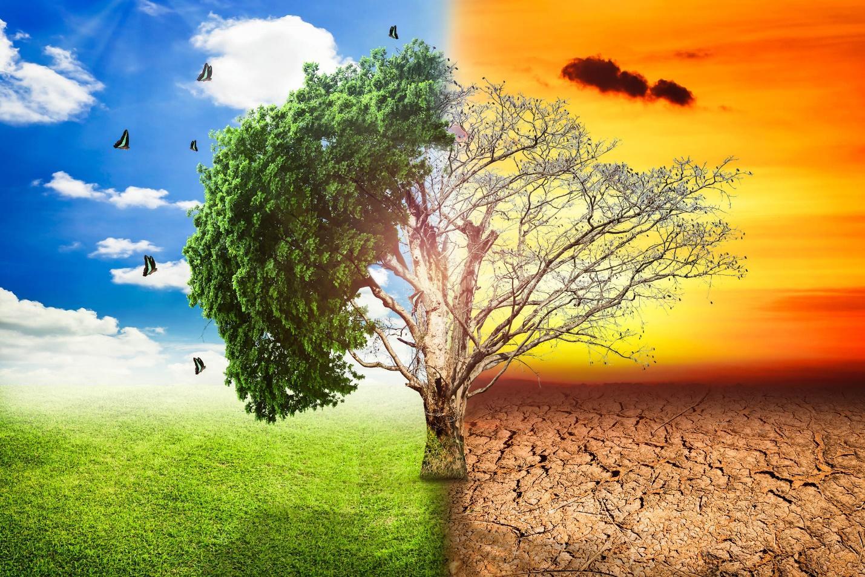 Photo of Неможноста за прилагодување на климатските промени – причина за изумирање на растителниот и животинскиот свет