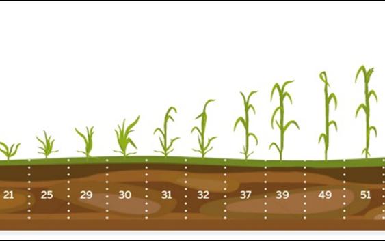 Заштита на житните култури во есенскиот период