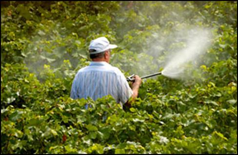 Нова кампања за целосно укинување на синтетичките пестициди