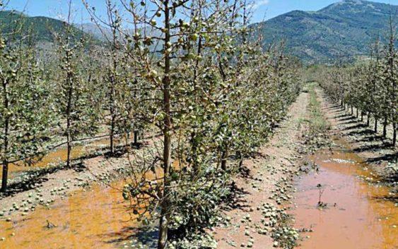 Преспанските овоштари чекаат отштети од државата