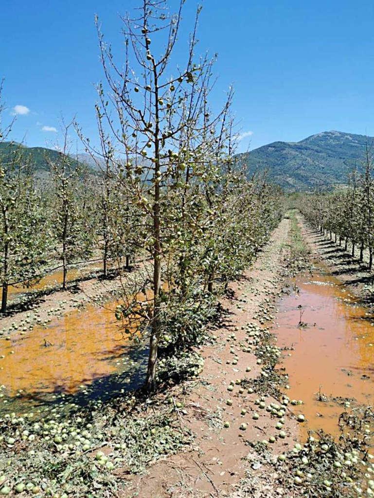 Photo of Преспанските овоштари чекаат отштети од државата