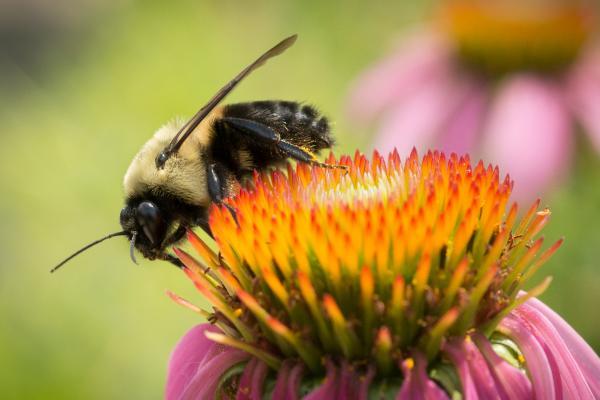 Photo of Преку 500 милиони пчели угинаа во Бразил за само три месеци