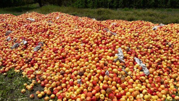 Photo of Преспанското јаболко  годинава ќе биде луксуз, ќе нема ни за граѓаните ни за индустријата