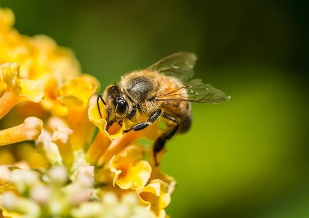 Photo of Пчелите се прогласени за најважни живи суштества на Земјата