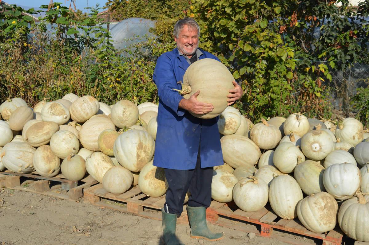 Photo of Тиква над 60 килограми роди нивата на Целе Коњарски од Долно Оризари