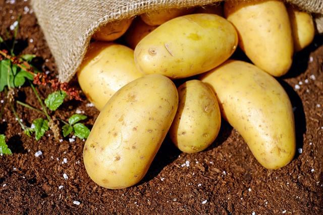 Photo of Земјоделците задоволни од родот на компир годинава