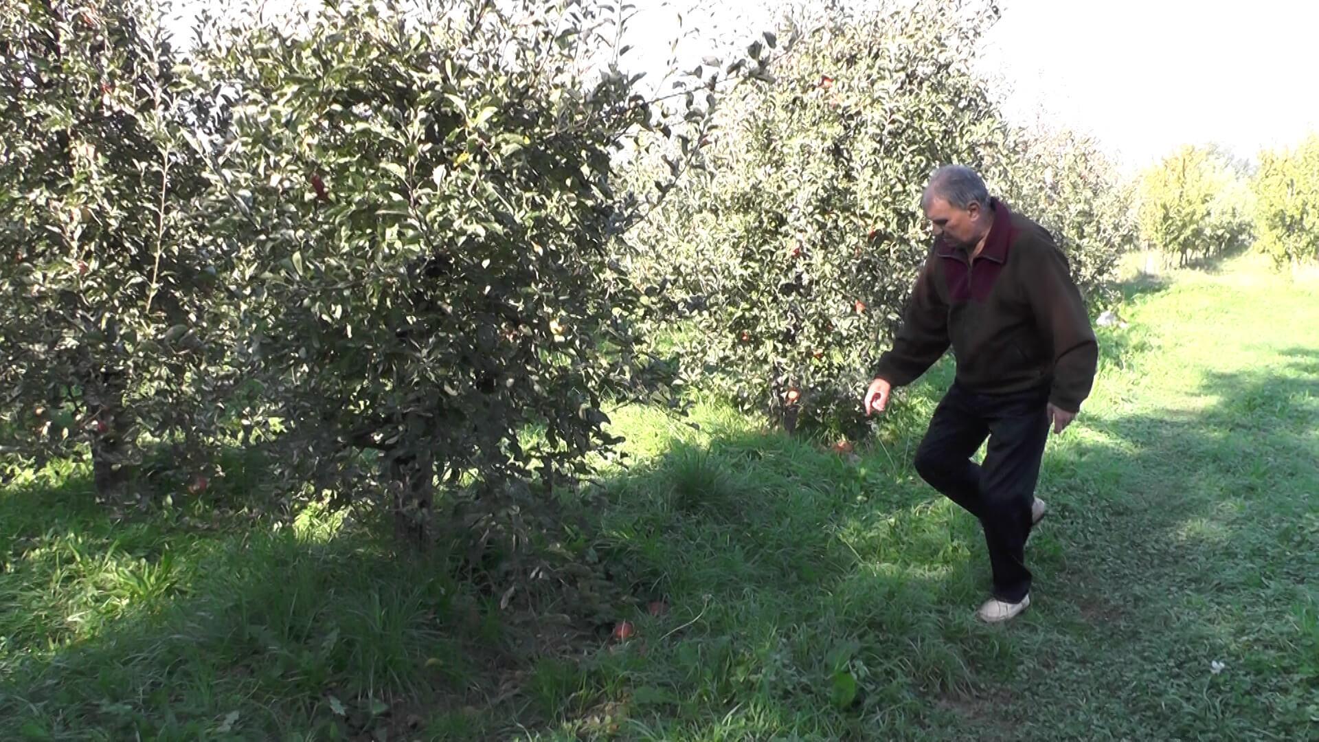 Photo of Исчезнува познатиот бренд тетовското јаболко