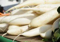"""Бела ротква: Јапонците ја викаат """"чистач на телото"""""""