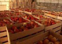 Чување на јаболката – ладилници
