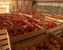 Photo of Чување на јаболката – ладилници