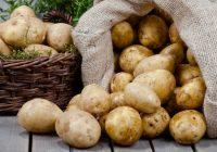 Правилно складирање и чување на компирот во текот на зимата