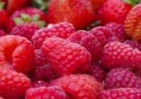 МАЛИНА (Rubus sp.)