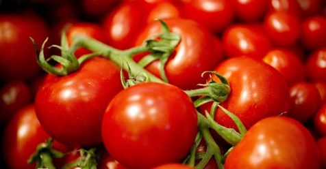 Photo of Чување на органски домат (Lykopersikon eskulentum)