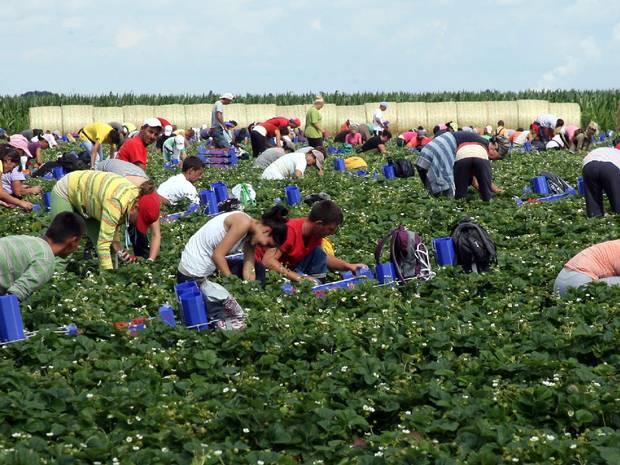 Photo of Се бараат берачи на јаболка, грозје, сливи, а дневниците се движат од 1.000 денари до 200 евра