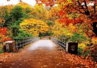 Што се режи во есен, а што не?