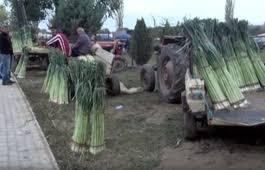 Photo of Производителите на праз: Цената е ниска – министерството за земјоделство ќе поттикне инвестиции за преработка