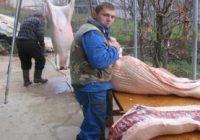 Во сезоната на колење свињи-заштитете се себе си и околината