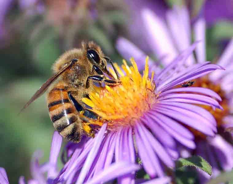 Photo of Екологија: Краток есеј за екологијата