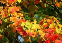Зошто лисјата ја менуваат бојата во есен?