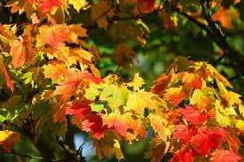 Photo of Зошто лисјата ја менуваат бојата во есен?