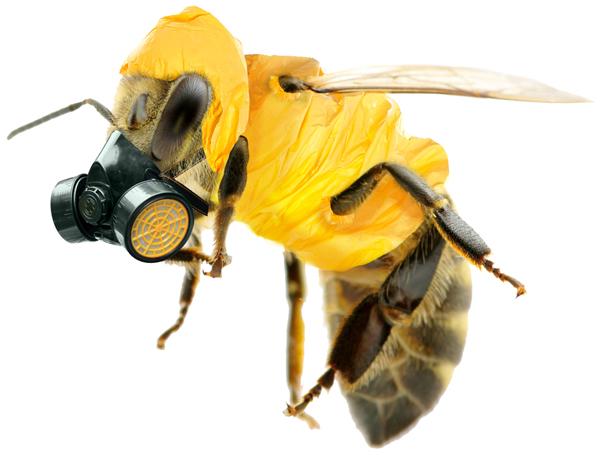 Photo of Стоп за неоникотиноидите – убијците на пчелите