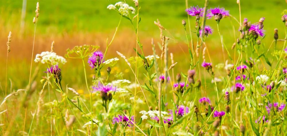 Photo of Закана за растителниот свет: Поради аерозагадувањето трајно ќе исчезнат некои билки