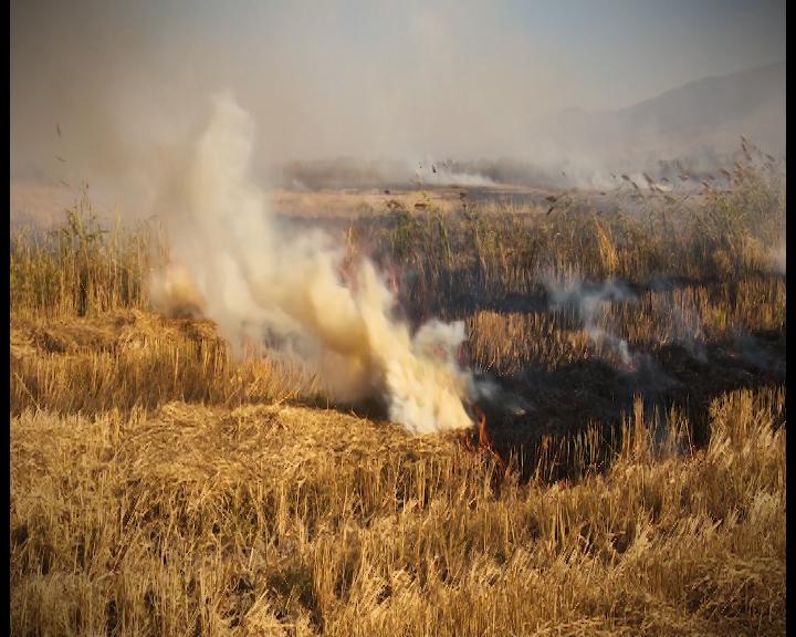 Photo of Палењето стрништа ги намалува приносите и загадува
