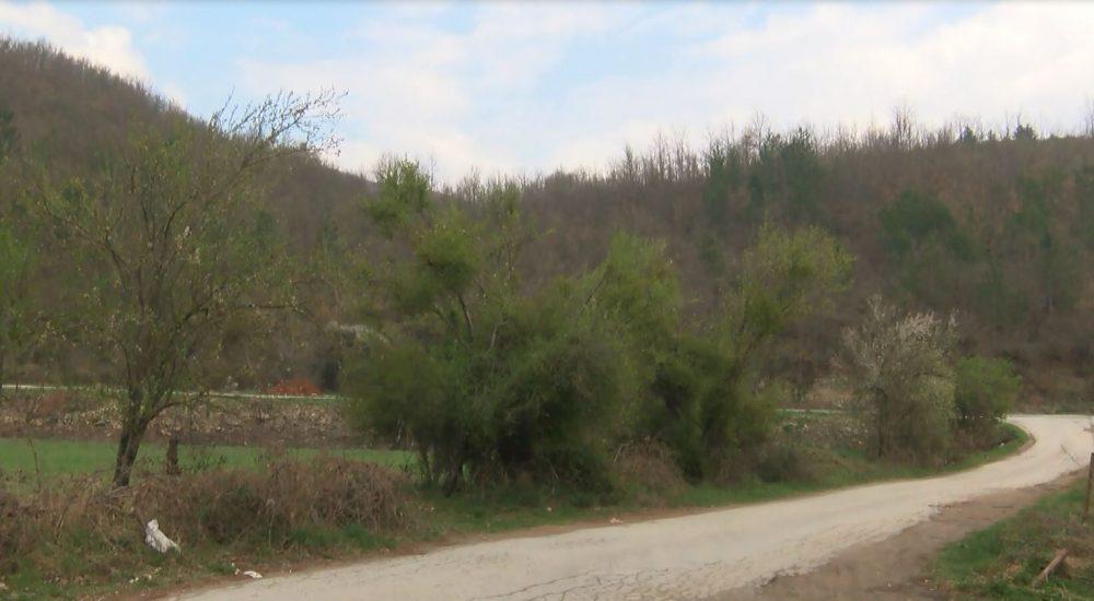 Photo of Климатските проемни и топлите зими може да ја уништат моликата и другите шумски видови дрвја