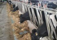 Има ли иднина органското производство на млеко?