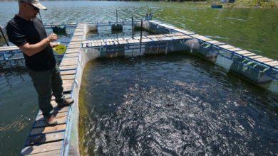 Photo of Рибниците на Треска едвај ја преживеаја есенската суша