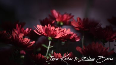 Photo of Убавината на цвеќето