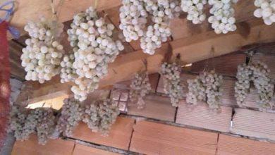 Photo of Магијата на гроздовите по таваните во зима